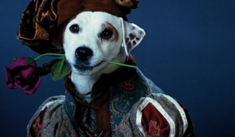 What's the Story Now, Wishbone? A Movie.